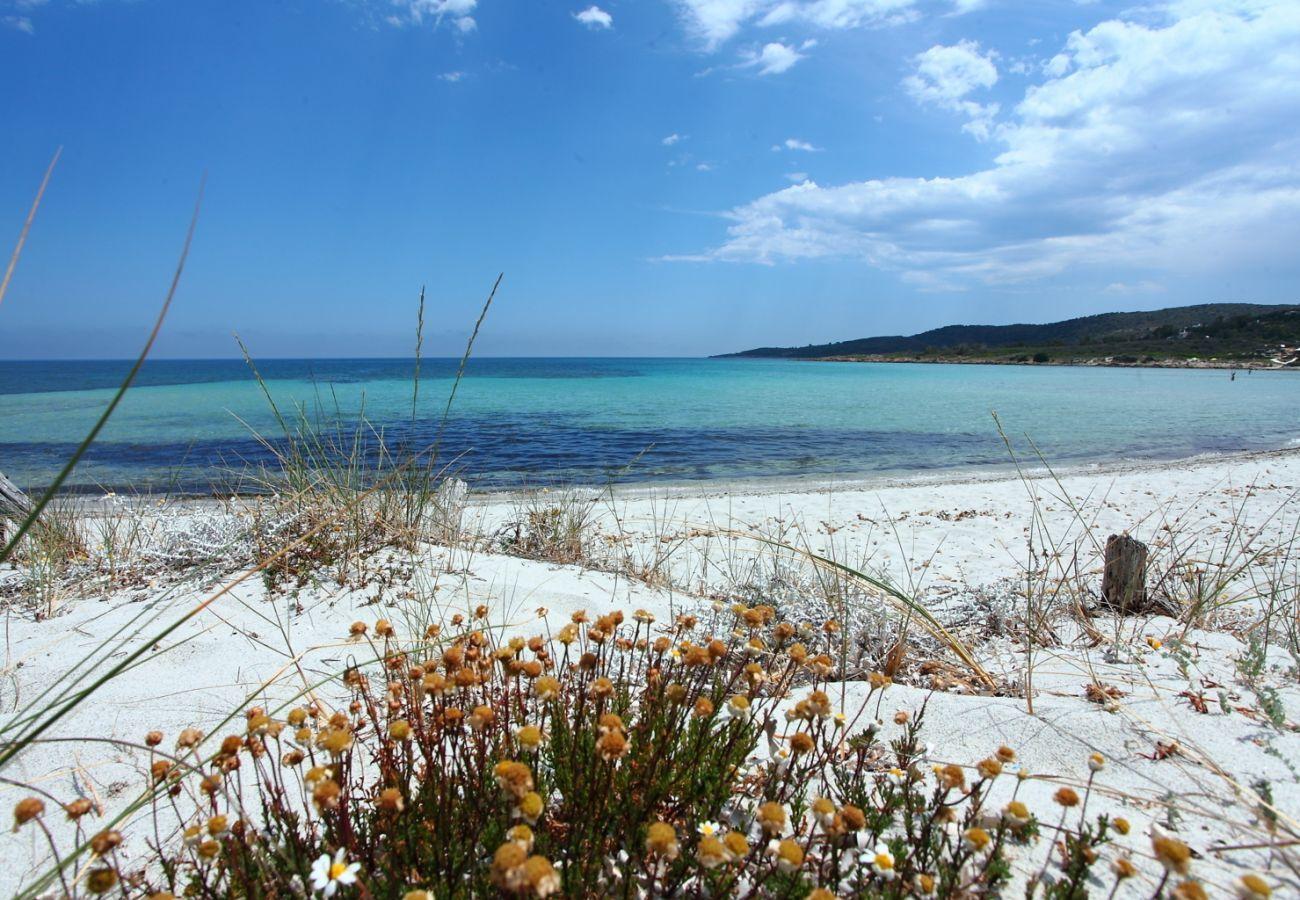 Appartamento a Olbia - Maestrale B-Flat - vista panoramica 170mt Spiaggia | Klodge